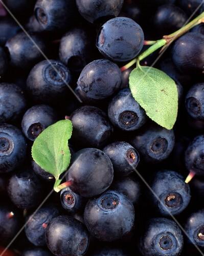Blueberries with leaves (macro zoom)