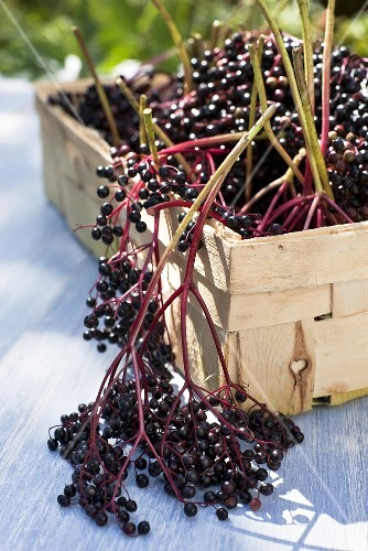 Elderberries in a wooden basket on a garden table