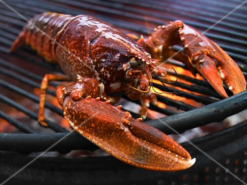 A lobster on a grill