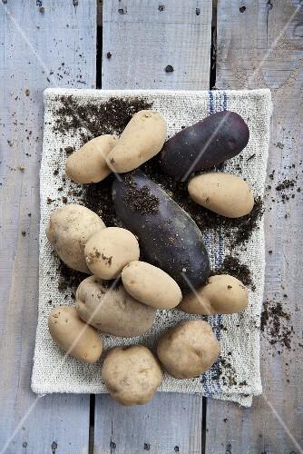 Red Potatoes and White Potatoes