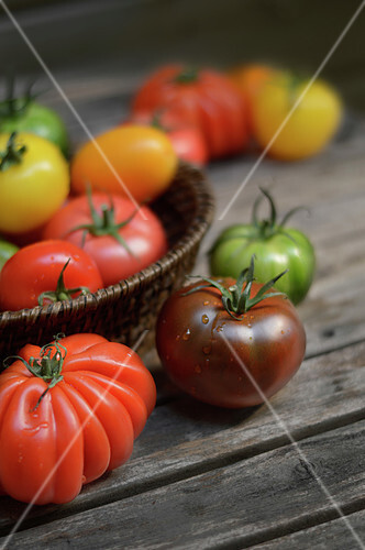 Assortment of different colored tomatoes