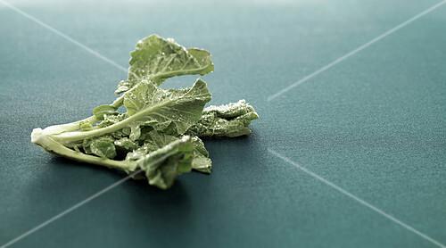 Kale cabbage leaf