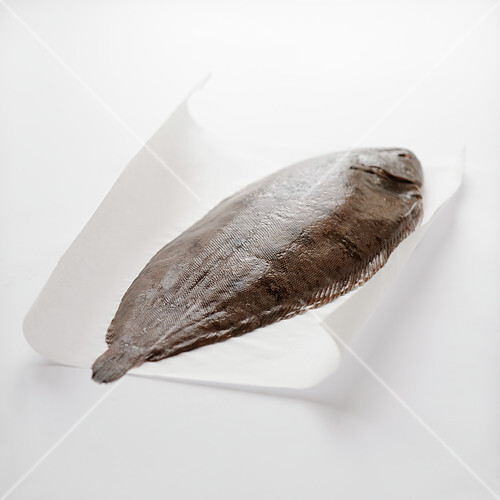 Raw whole sole on a white background