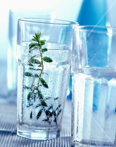 Glass of sparkling water with sprig