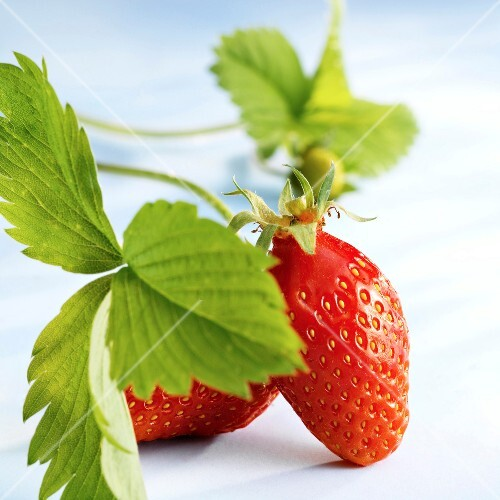 gariguette strawberry