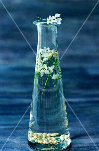 Vinegar with bear's garlic