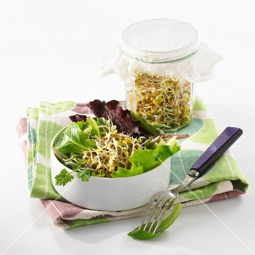 A salad of young sprouts