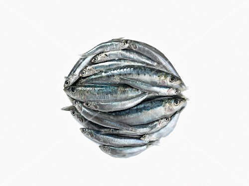 Composition with raw sardines