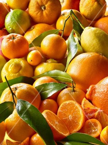 Verschiedene Zitrusfrüchte (Draufsicht)