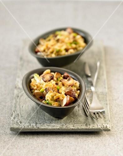 Individual pasta shell and mushroom gratins