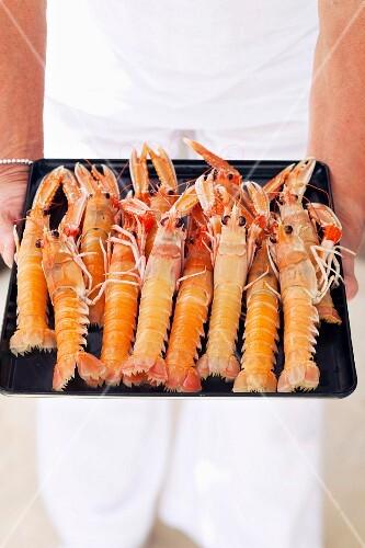 Dublin Bay prawns