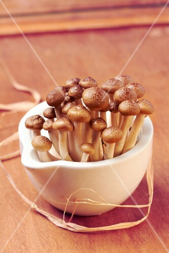 Hohshimejis mushrooms