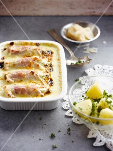 Chicory and ham bechamel gratin