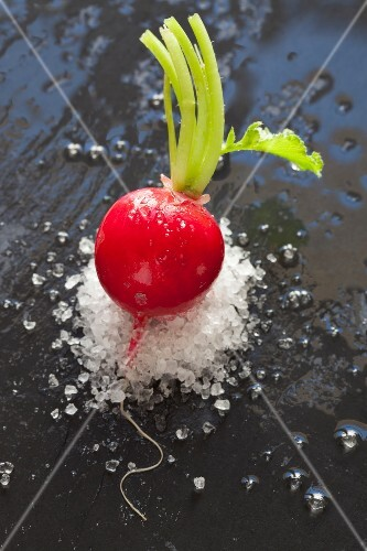Radish with coarse salt