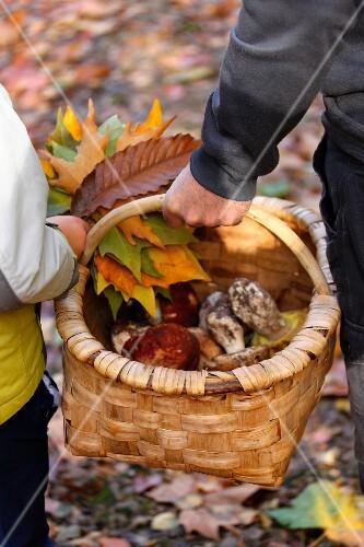 Basket of freshly gathered ceps