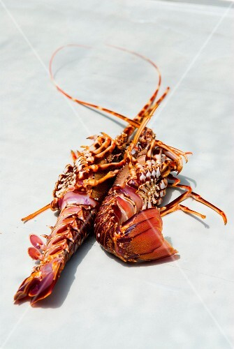 Fresh spiny lobsters