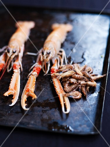 Fresh langoustines and brown shrimps