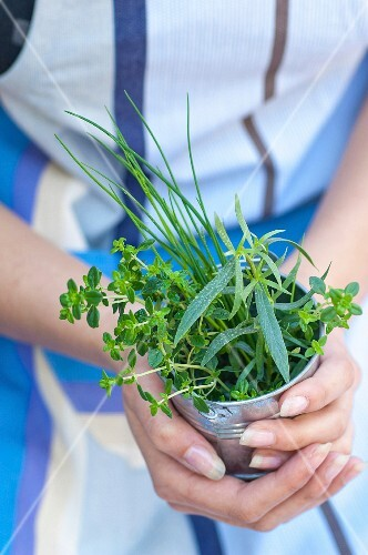 Person carrying a pot of fresh herbs