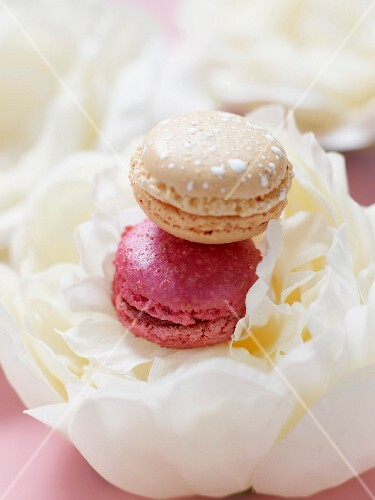 Macaroons on a white pepony