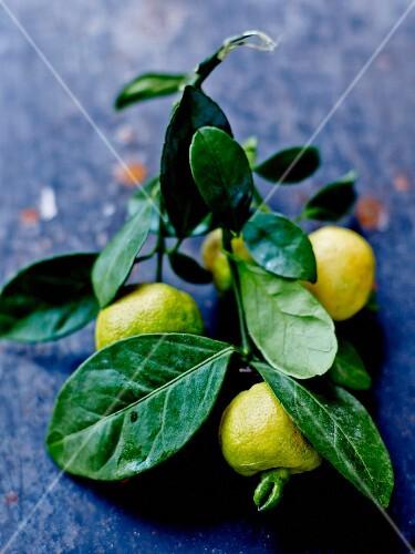 Green mandarin oranges