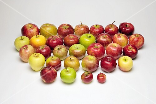 Thirty two different apple varieties