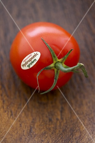 A Single Hydroponic Grown Tomato