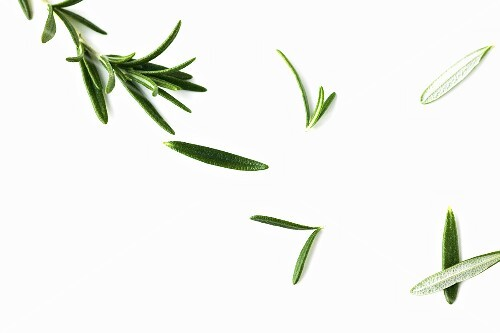 Rosemary Sprig and Leaves