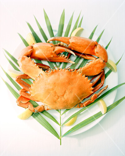 MADAGASCAR, crab on mangrove leaf, close-up, Anjajavy Hotel