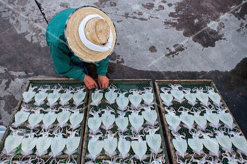 peddler. A fishmonger selling cuttlefish, in fishing Port,Katsuura, Nachikatsuura,Kumano Kodo, Nakahechi route, Wakayama, Kinki, Japan.